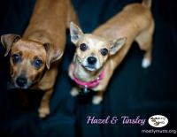 Hazel and Tinsley