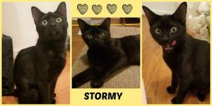 Stormy collage-X2.jpg