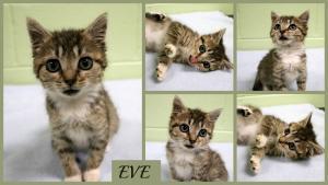 Eve collage-X2.jpg