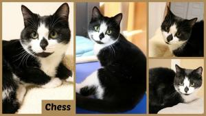 Chess collage-X2.jpg