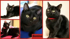 Domino collage-X2.jpg