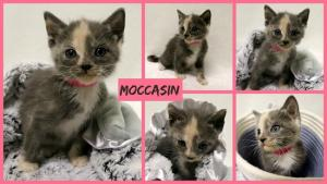 Moccasin collage-X2.jpg
