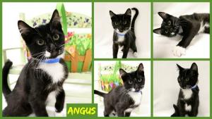 Angus collage-X2.jpg