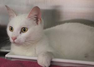 Kitty Blanca 1 022519.jpg