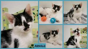 Arnold collage-X2.jpg
