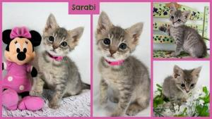 Sarabi collage-X2.jpg