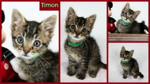 Timon collage-X2.jpg