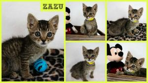 Zazu collage-X2.jpg