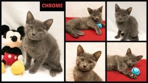 Chrome collage-X2.jpg