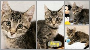 Bing collage-X2.jpg
