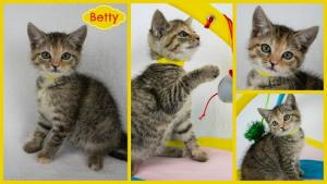 Betty collage-X3.jpg