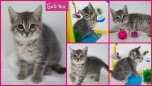 Sabrina collage-X3.jpg