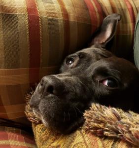 Betty Boop 102220-1.jpg