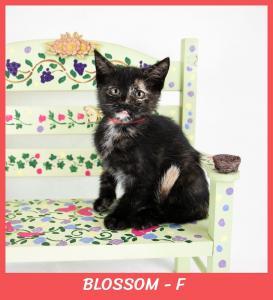 Blossom w name-XL.jpg