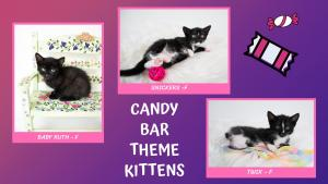 Candy Bar Theme-X2.jpg