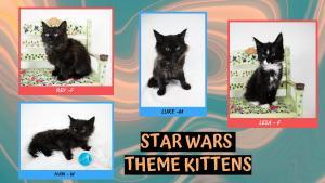 Star Wars Theme Kittens-X2.jpg