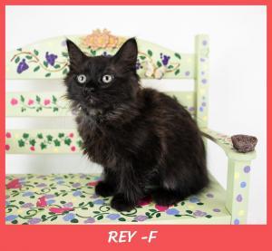 Rey w name-XL.jpg