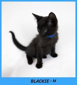 Blackie w name2-XL.jpg