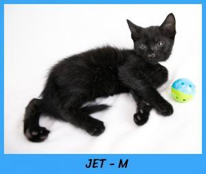 Jet w name2-XL.jpg