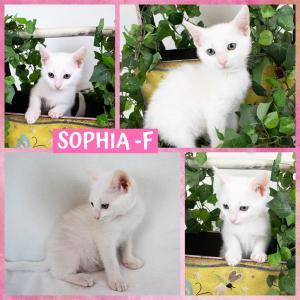 Sophia FB 0620-XL.jpg