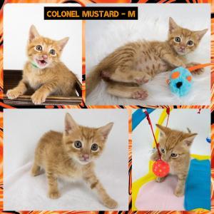 Colonel Mustard FB 0620-XL.jpg
