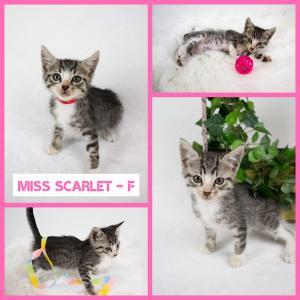 Miss Scarlet FB 0620-XL.jpg