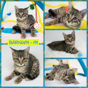 Barnum FB 0620-XL.jpg