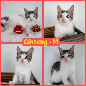 Ginseng FB 0720-XL.jpg