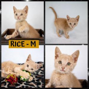 Rice FB 0720-XL.jpg
