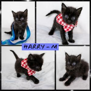 Harry FB 0720-XL.jpg