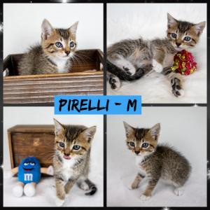 Pirelli FB 0720-XL.jpg