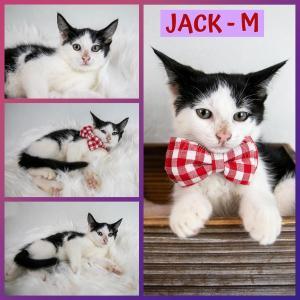 Jack FB 0720-XL.jpg