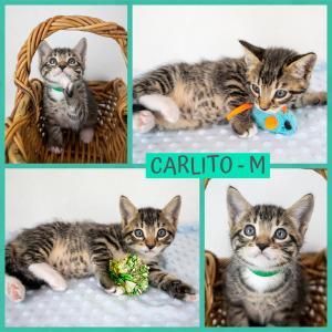 Carlito FB 0920-XL.jpg