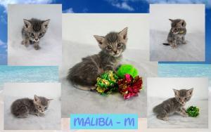 Malibu FB 0620-XL.jpg