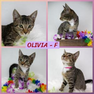 Olivia FB 0820-XL.jpg
