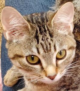 Maisie profile.jpg